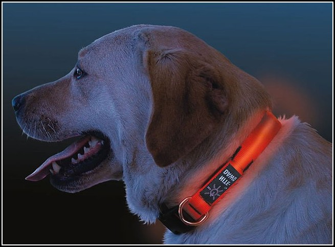 Dog Collar Light Australia