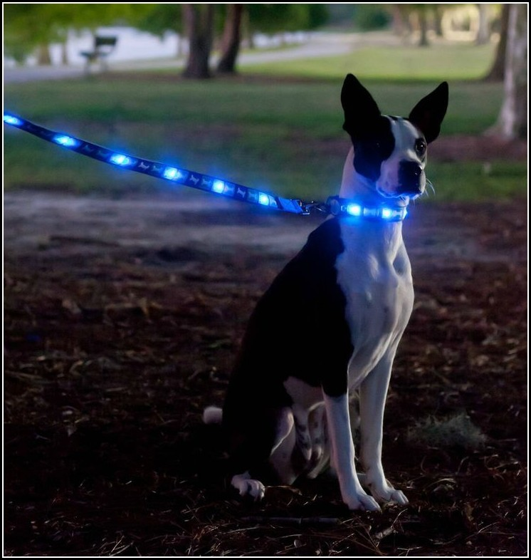 Dog Collar Light Petsmart