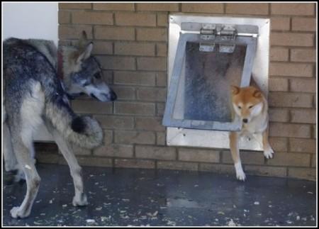 Dog Door Reviews Insulated