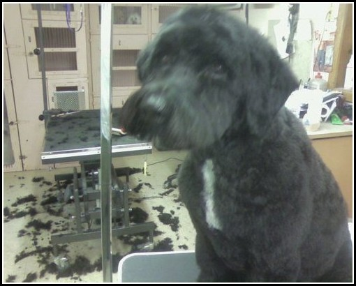 Dog Grooming Chicago Il