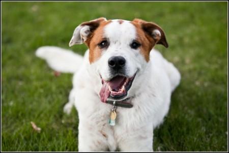 Dog Grooming Denver Cherry Creek