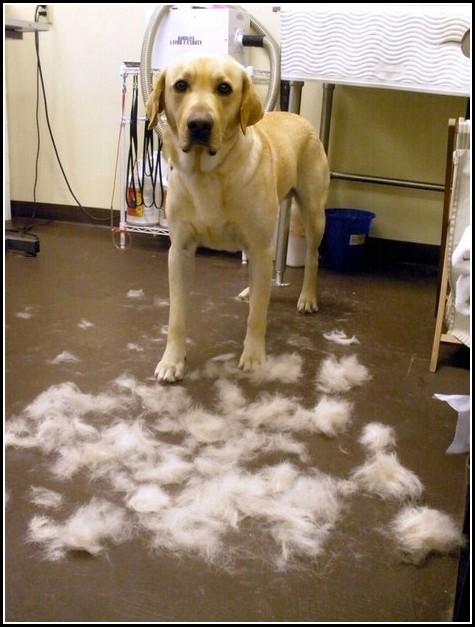 Dog Grooming Denver Co