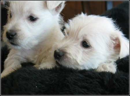 Dog Grooming Denver Highlands