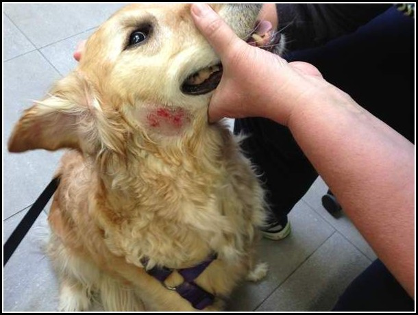 Dogs Hot Spots Pictures