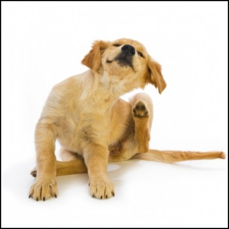 Dry Skin Dogs Natural Remedies
