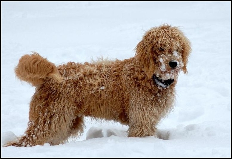 Dry Skin Dogs Winter