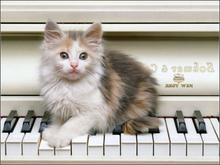 Funny Kitten Pictures For Kids