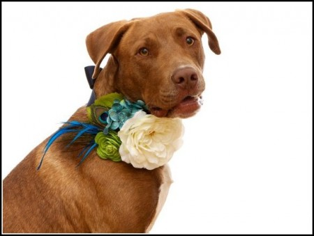 Girl Dog Collars With Flowers