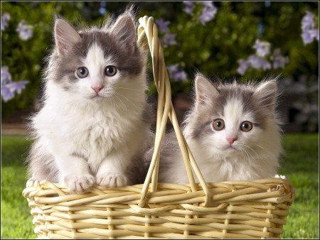 Images Of Kittens And Cats