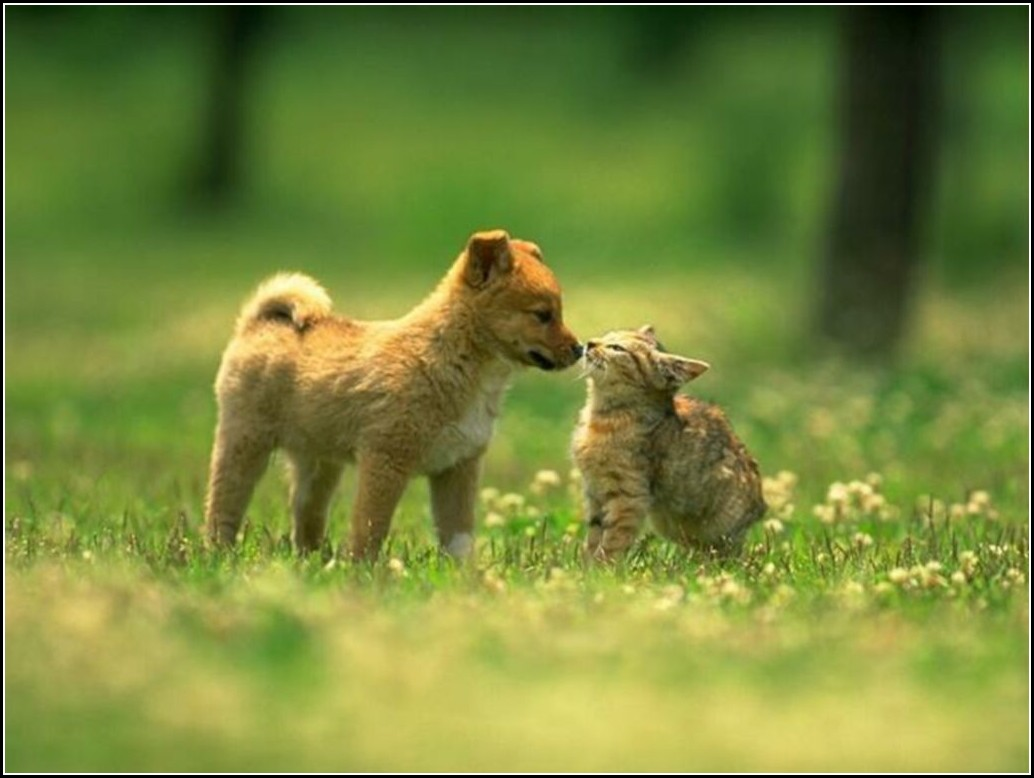 Images Of Kittens And Puppies