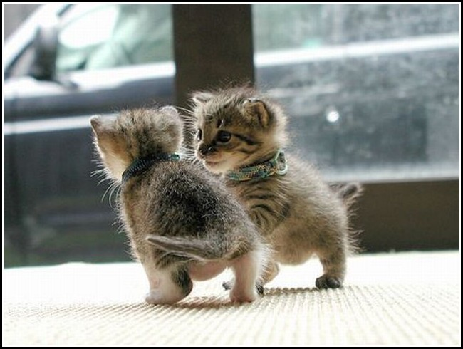 Images Of Kittens Playing