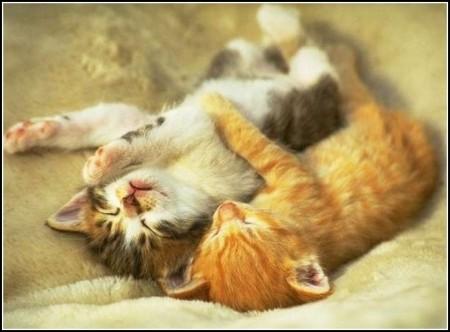 Images Of Kittens Sleeping