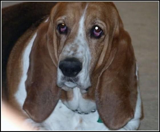Kill Fleas On Dogs With Vinegar