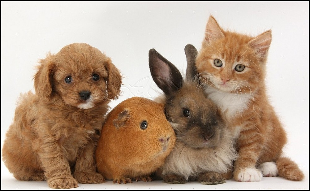 Kittens And Puppies And Bunnies And Hamsters