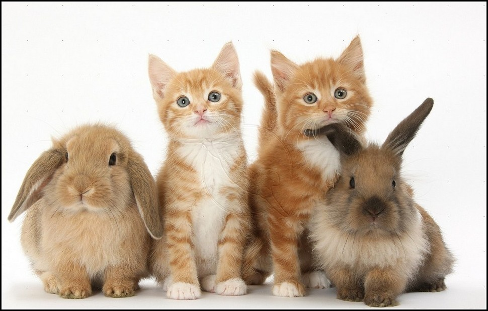 Kittens And Puppies And Bunnies