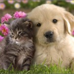 Kittens And Puppies Pictures