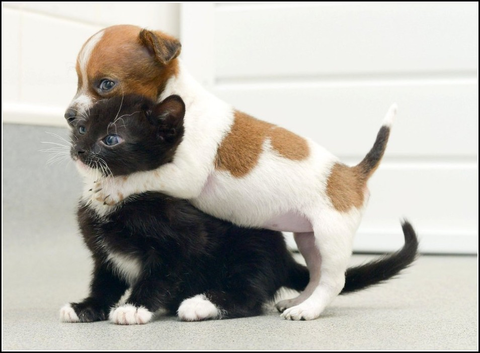 Kittens And Puppies Playing