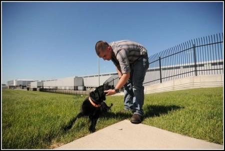 Military Dog Adoption Canada