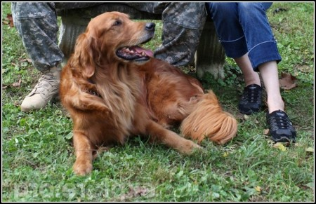 Military Dog Adoption Story
