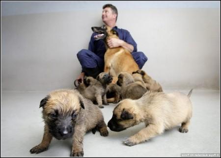 Military Dog Adoption Uk