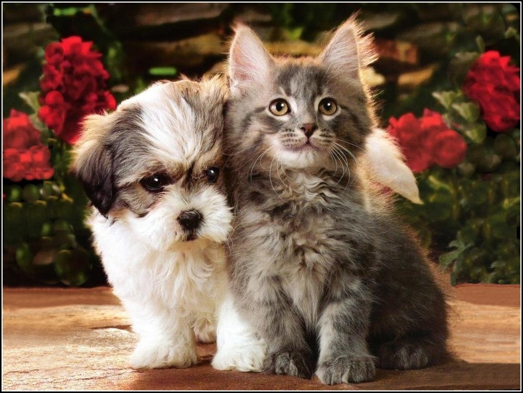 Pictures Of Baby Kittens And Puppies