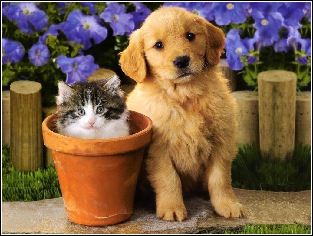 Pictures Of Cute Kittens And Puppies