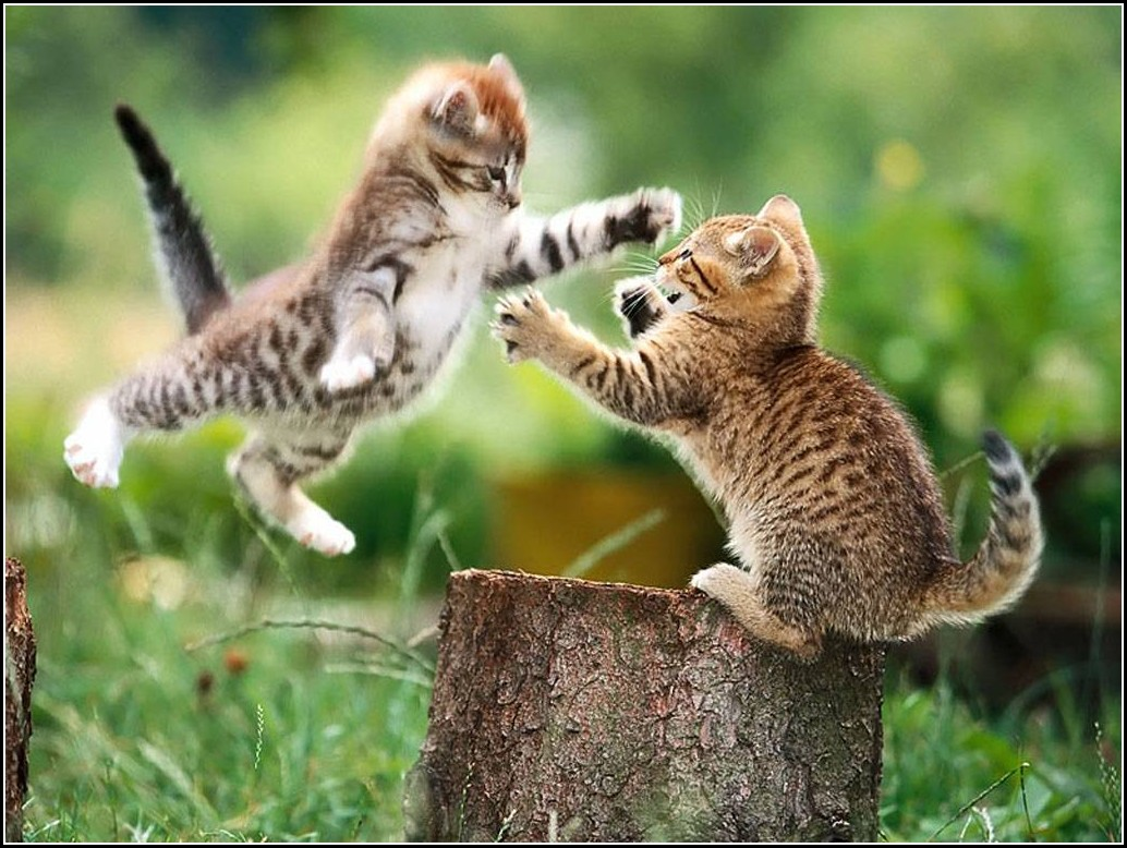 Pictures Of Cute Kittens Playing