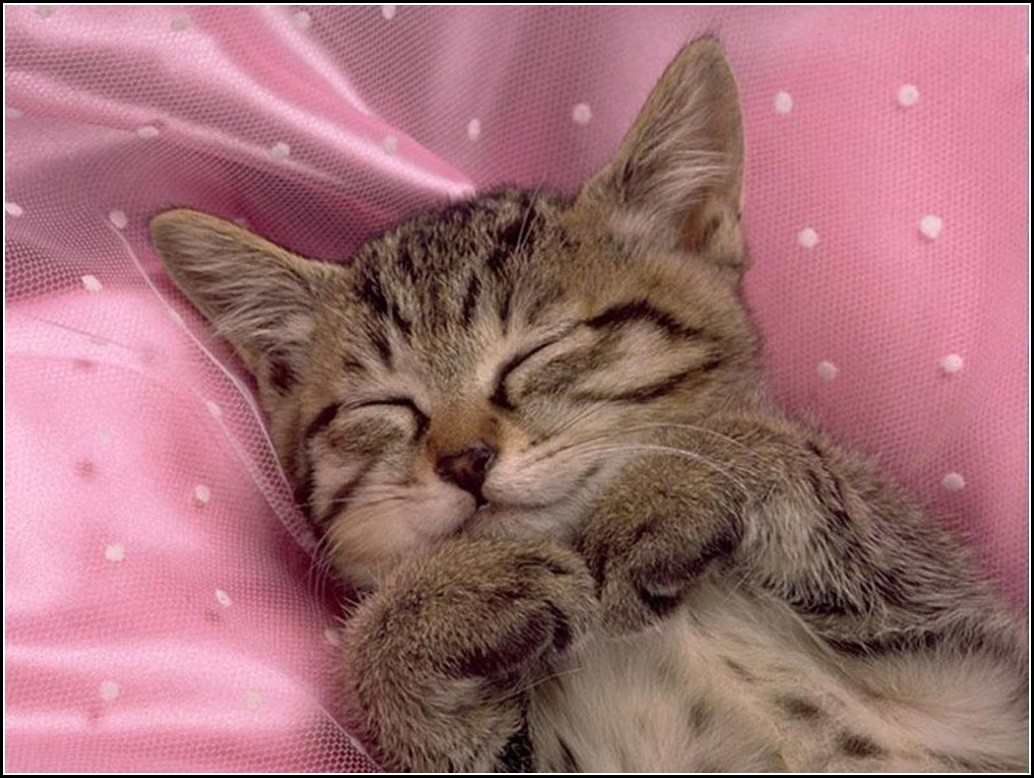 Pictures Of Cute Kittens Sleeping