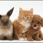 Puppies And Kittens And Bunnies And Hamsters