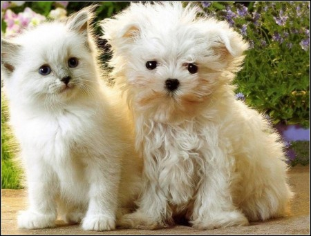 Puppies And Kittens Together Wallpaper