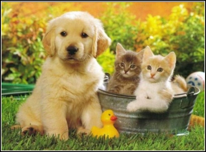 Puppy And Kitten Cute