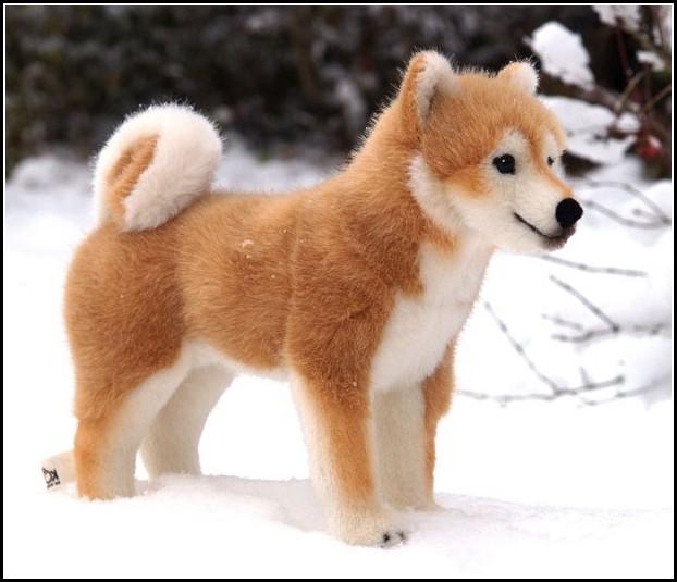 Shiba Inu Dogs Uk