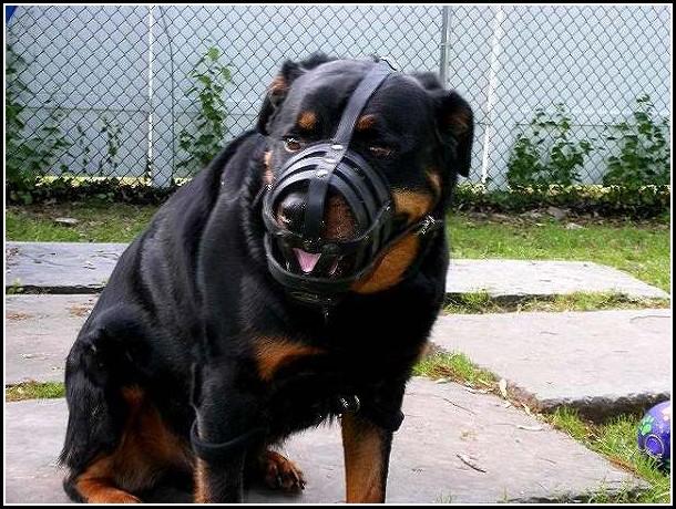 Strongest Dog Bite Strength