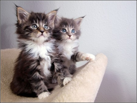 Types Of Kittens List
