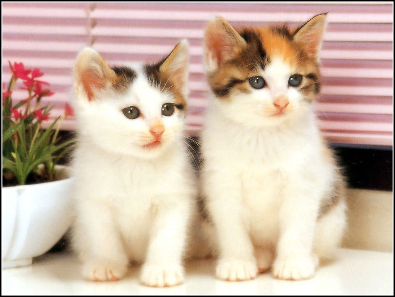 Types Of Kittens With Pictures