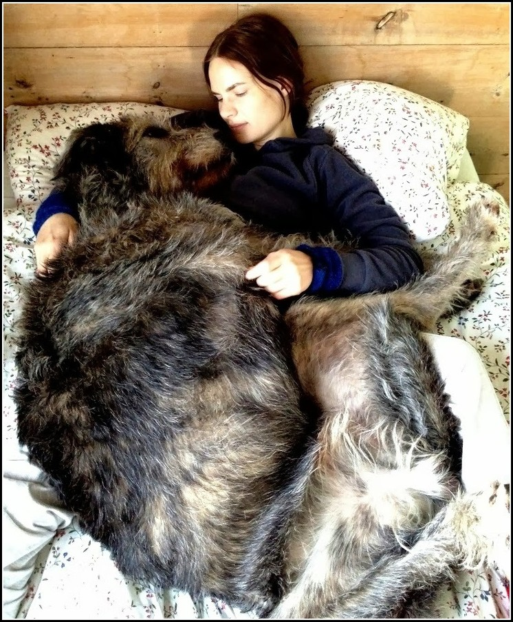 World's Largest Dog Breeds Top Ten