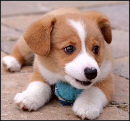 Cute Baby Dogs Images