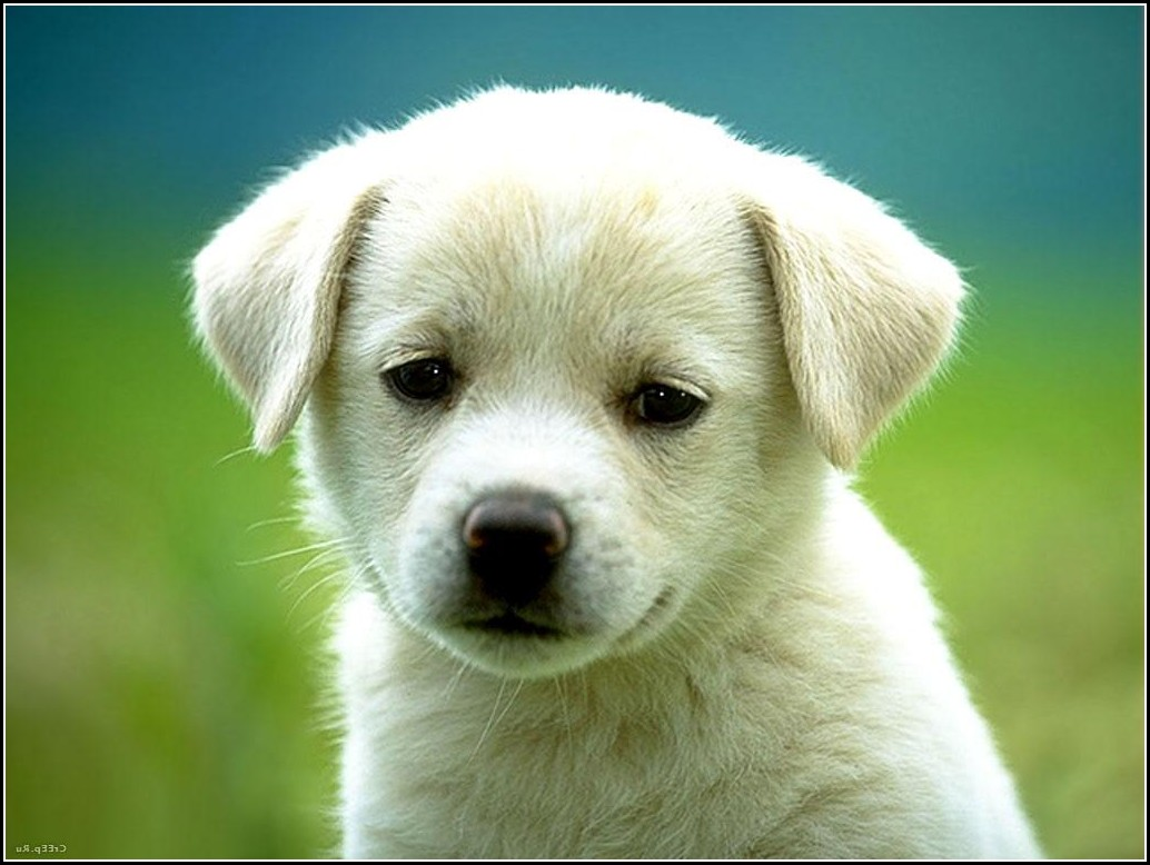 Cute Baby Dogs Photos