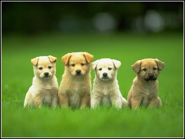 Cute Baby Dogs Pictures