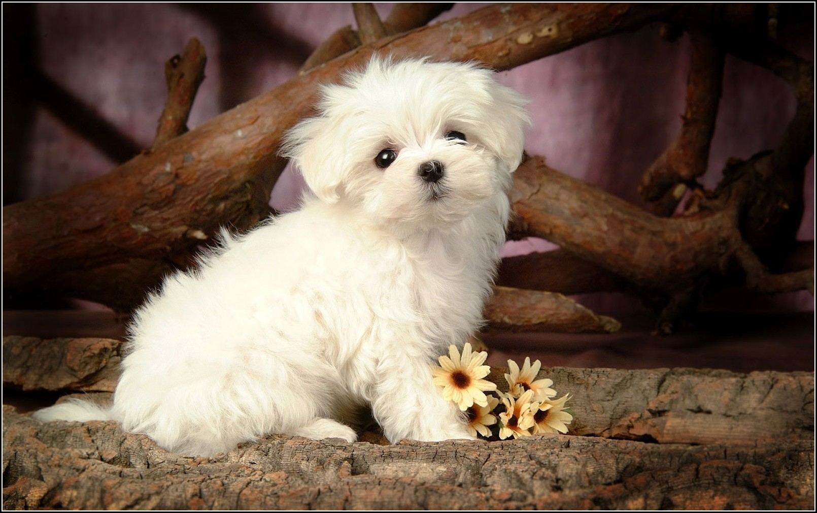 Cute Baby Dogs Wallpaper