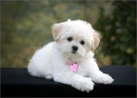 Small Family Dogs Breeds
