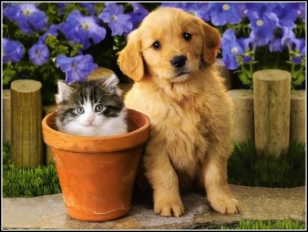 Baby Dogs And Cats