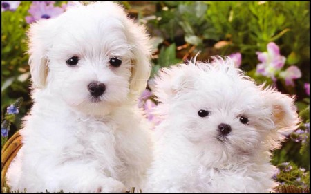 Baby Dogs Cute