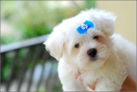 Baby Dogs Images