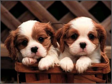 Baby Dogs Photos