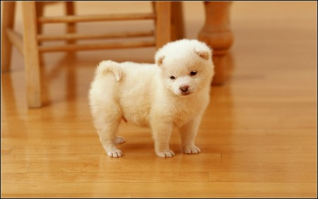 Baby Dogs Pictures Cute