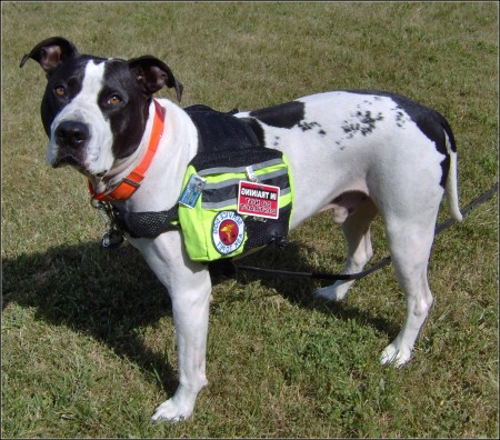 Backpack For Dogs Petsmart
