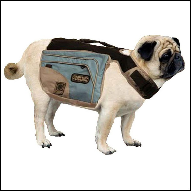 Backpack For Dogs Uk
