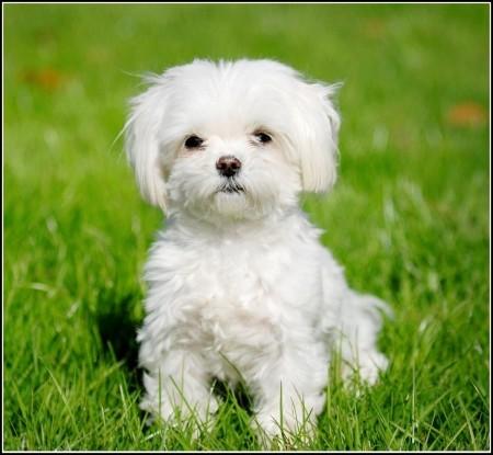 Best Dogs For Children