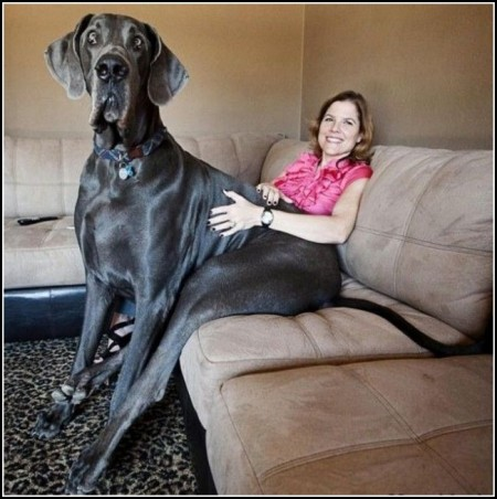 Big Dogs Images